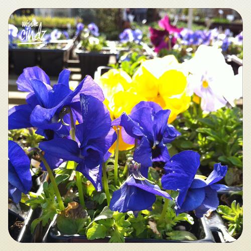 Heeley City Farm Spring Fayre