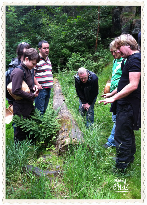 A guided foraging walk around the beautiful Wyming Brook nature reserve