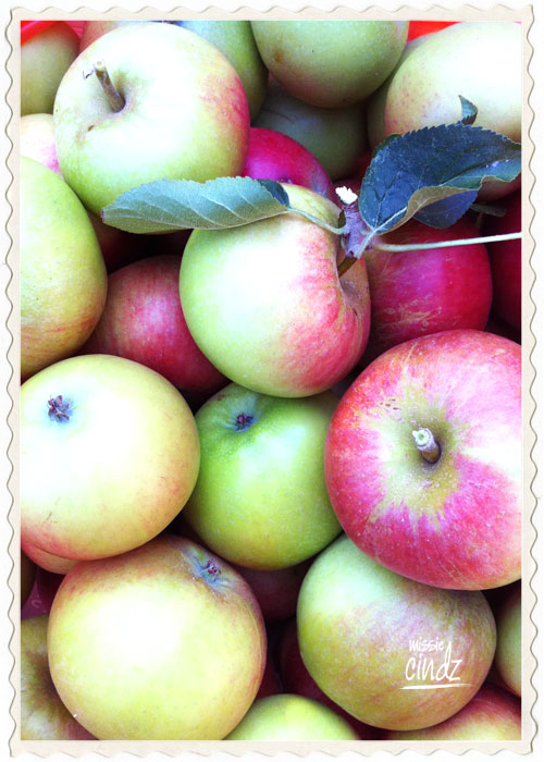 Lovely in season, Sheffield grown apples.