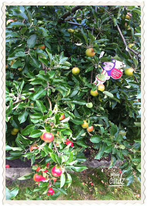 Forget Where's Wally, Where's Missie Cindz in the apple tree!?