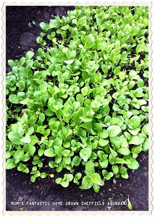 missie-cindz-grow-your-own-4