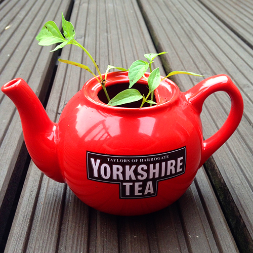 missie-cindz-tea-pot-planter