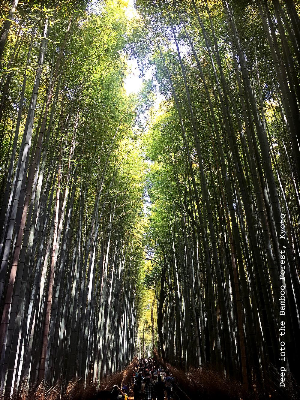 missie-cindz-bamboo-forest-kyoto-3